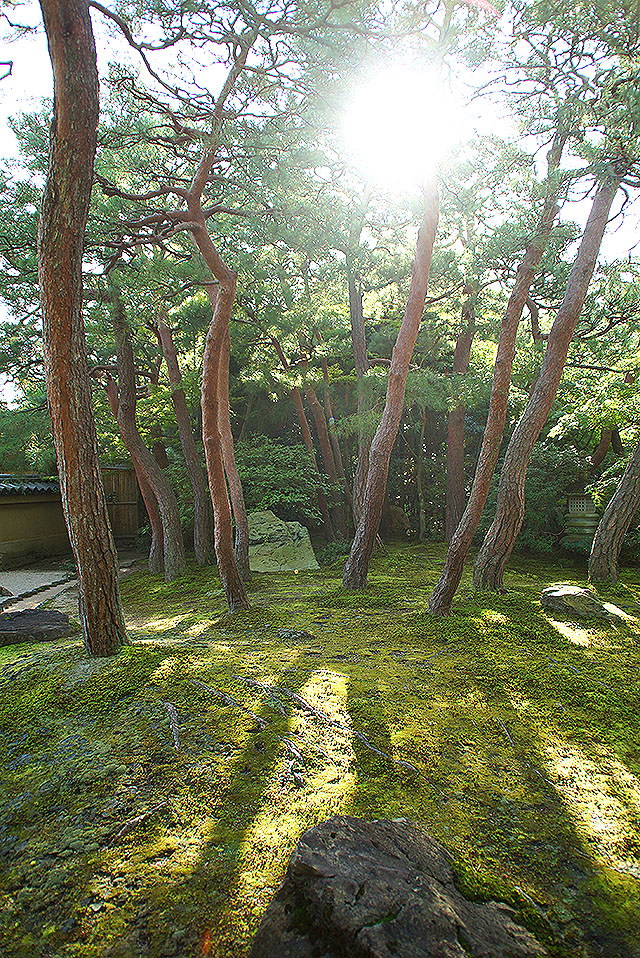 adachimuseum_pine.jpg