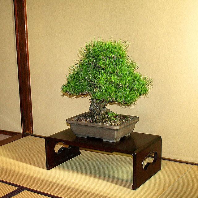 bukeyashiki_bonsai2.jpg
