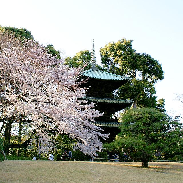 chinzanso_sanjutou3.jpg