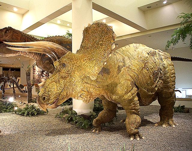 ehimekahaku_triceratops.jpg