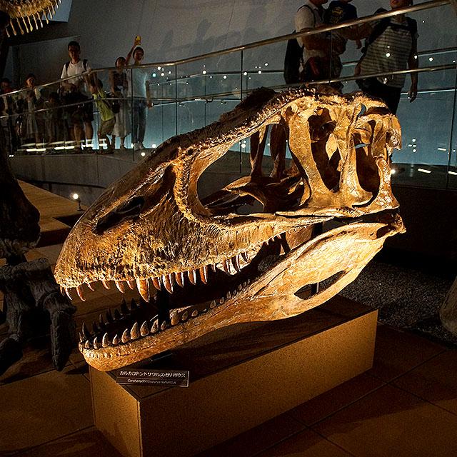 fpdm_carcharodontosaurus.jpg