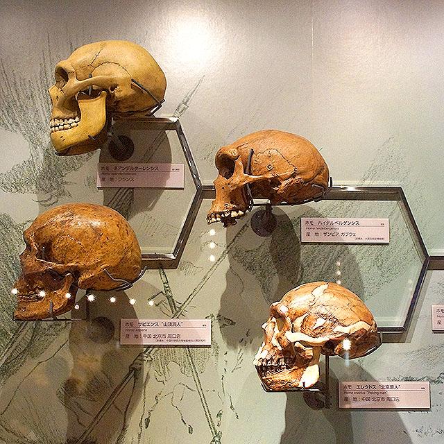 fpdm_skull.jpg