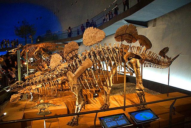 fpdm_stegosaurus.jpg