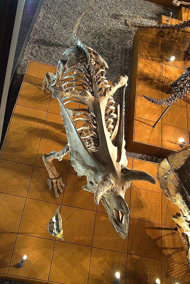 fpdm_triceratops.jpg