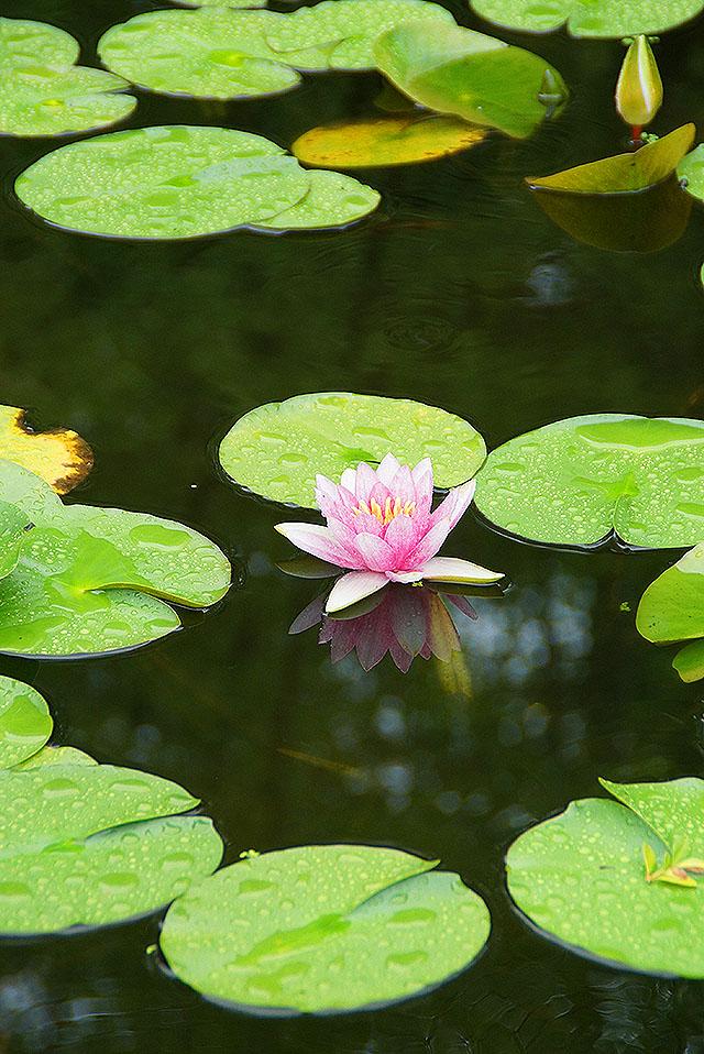hpc_flower.jpg