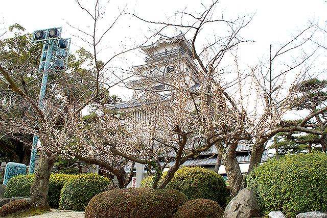 imabarijo_tenshu_momo.jpg
