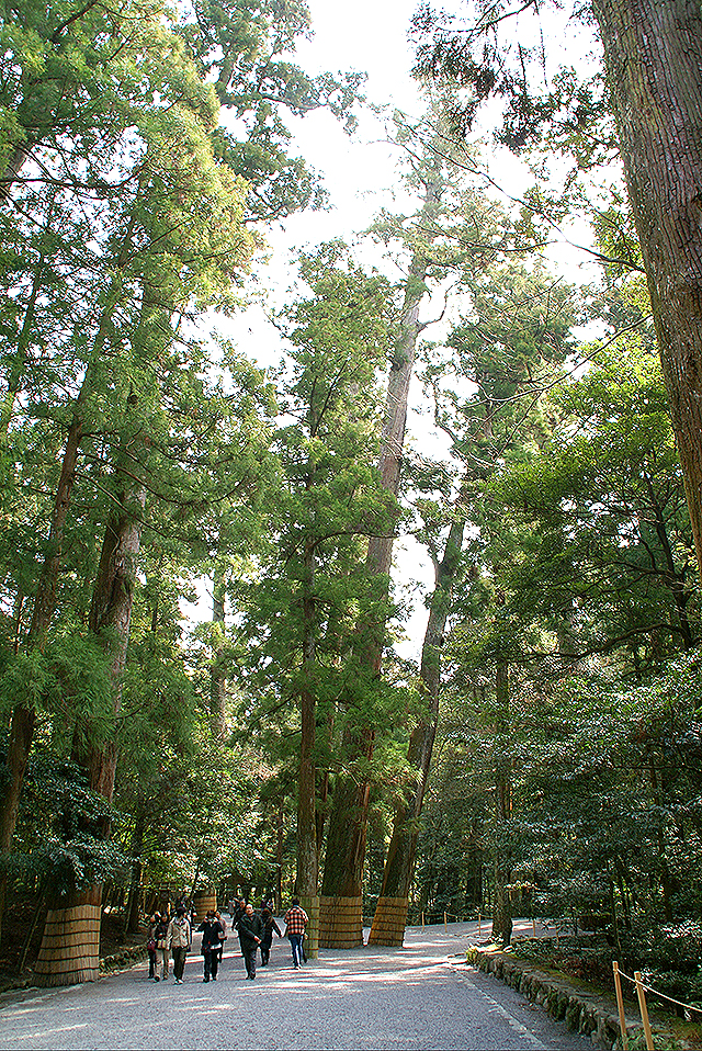 ise_naiku_forest2.jpg