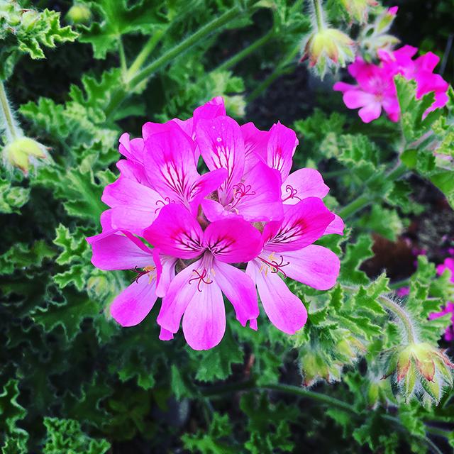 iyo_flower01.jpg