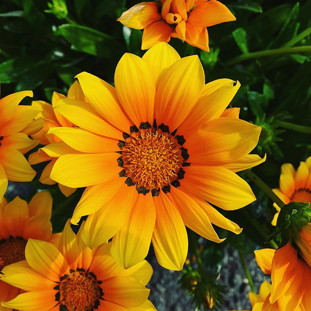iyo_flower02.jpg