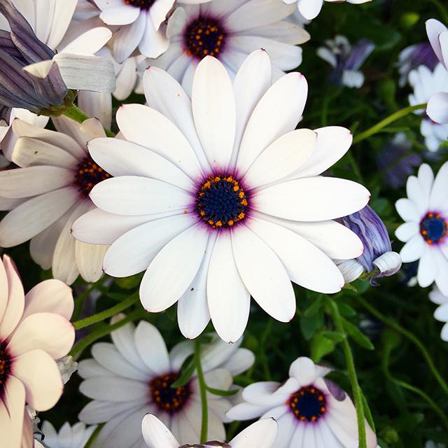 iyo_flower04.jpg