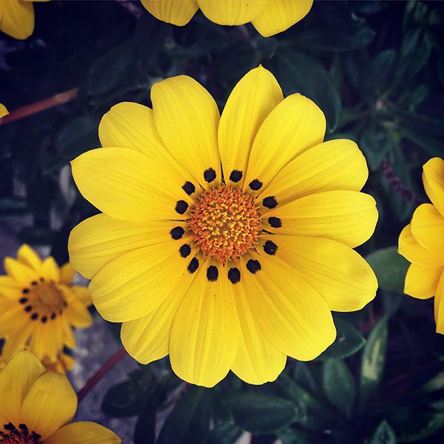 iyo_flower05.jpg