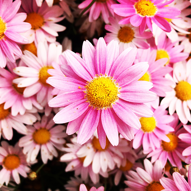 iyo_flower06.jpg