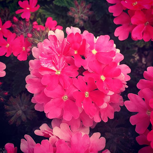 iyo_flower07.jpg