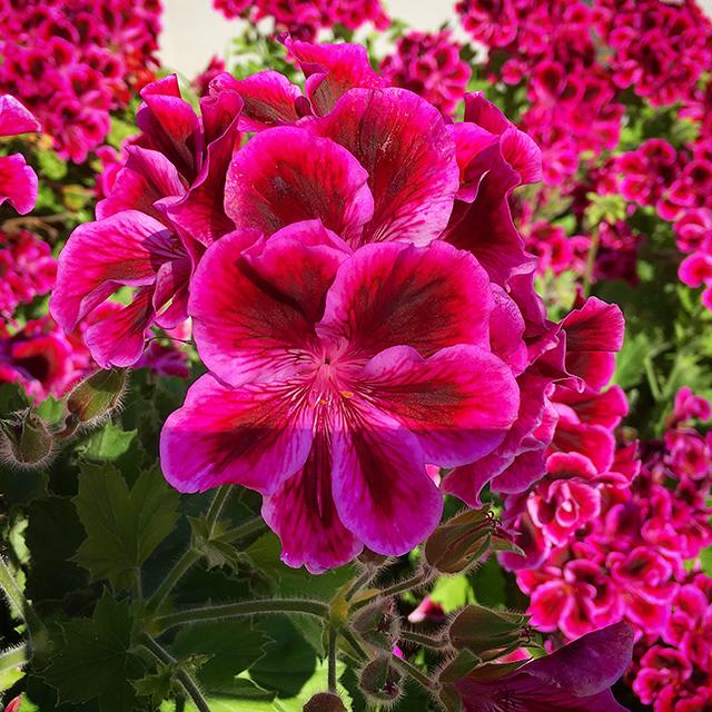 iyo_flower10.jpg