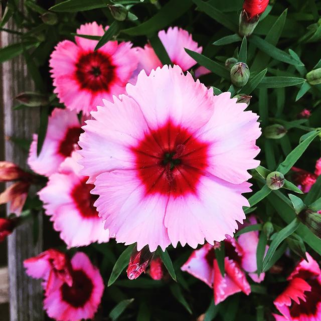iyo_flower11.jpg