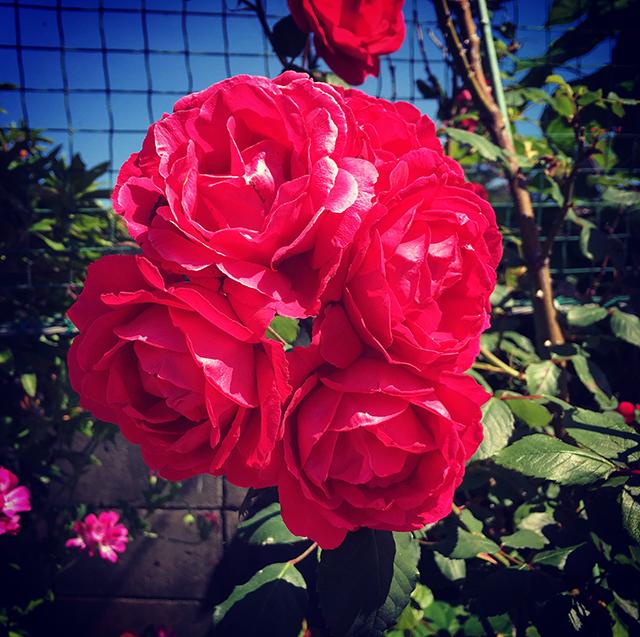 iyo_flower12.jpg
