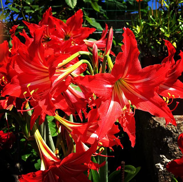 iyo_flower13.jpg