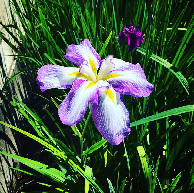 iyo_flower15.jpg