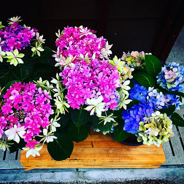 iyo_flower16.jpg