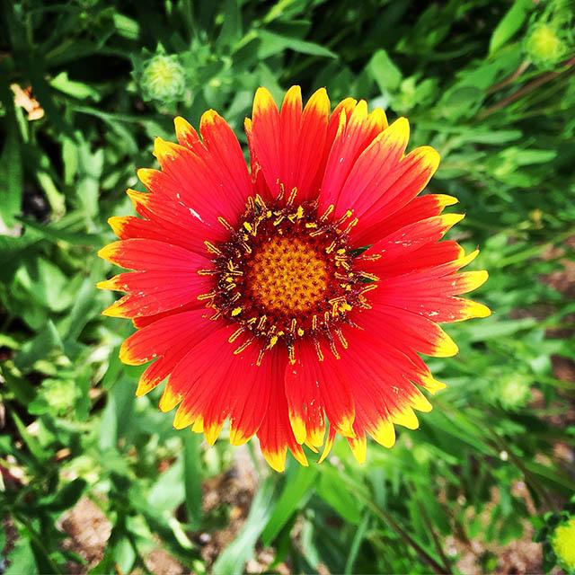 iyo_flower18.jpg