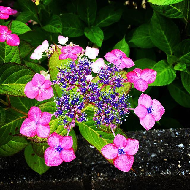 iyo_flower19.jpg