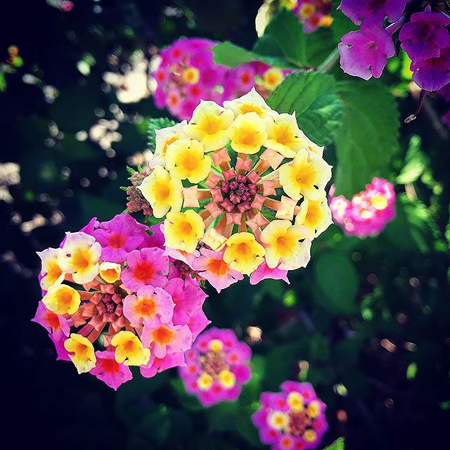 iyo_flower20.jpg
