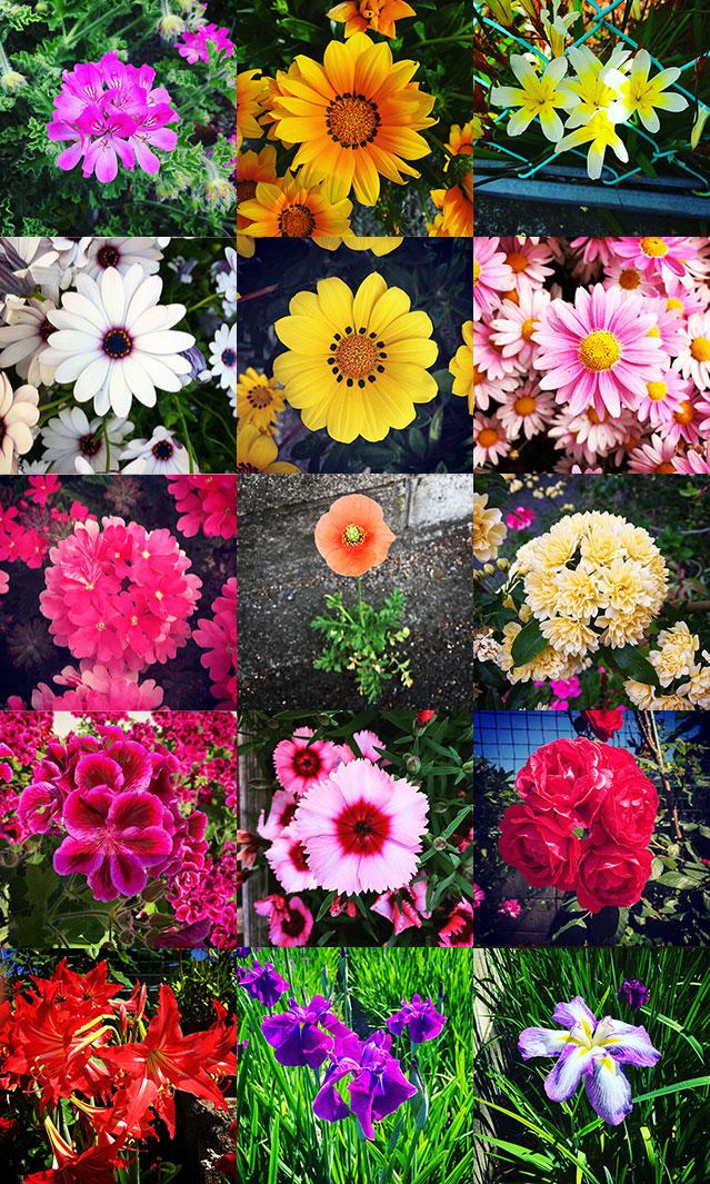 iyo_flower2017.jpg