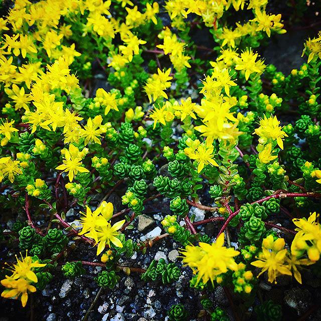 iyo_flower21.jpg