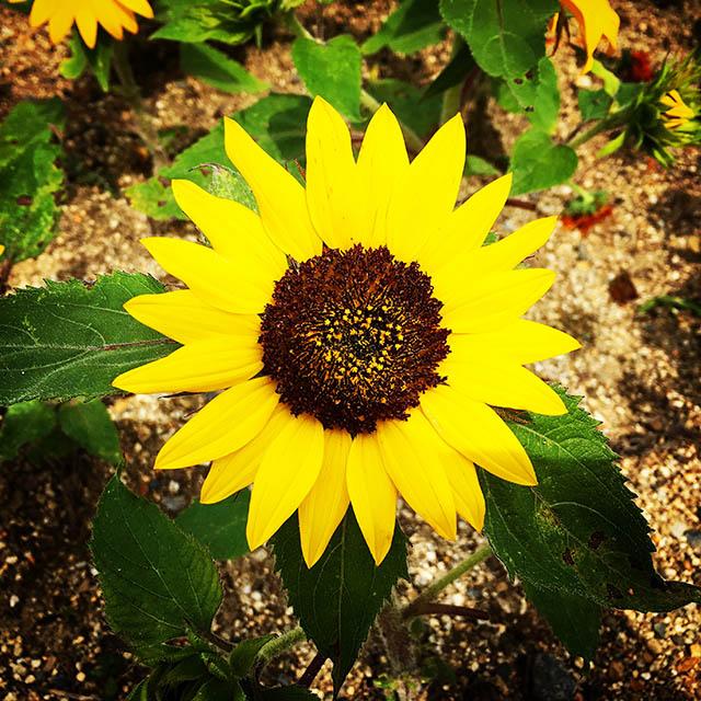 iyo_flower22.jpg