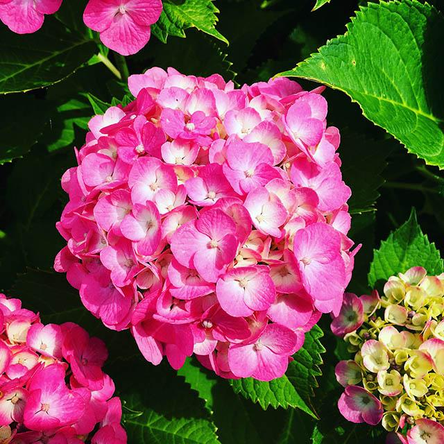 iyo_flower23.jpg