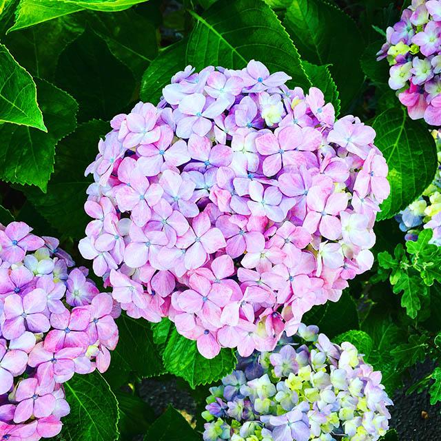 iyo_flower24.jpg