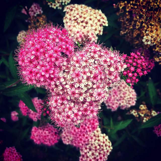 iyo_flower25.jpg
