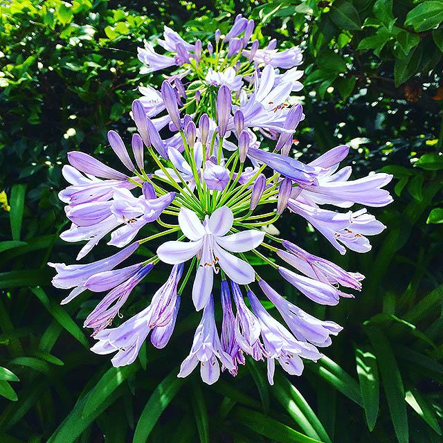 iyo_flower26.jpg