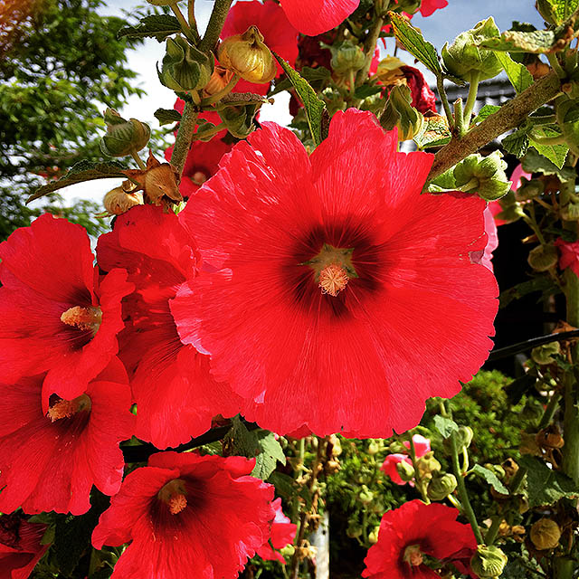 iyo_flower27.jpg
