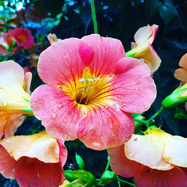 iyo_flower28.jpg