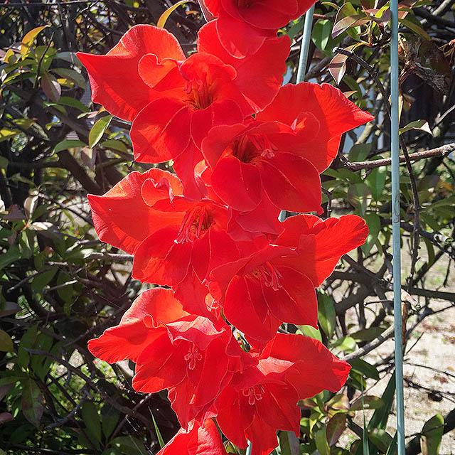 iyo_flower29.jpg