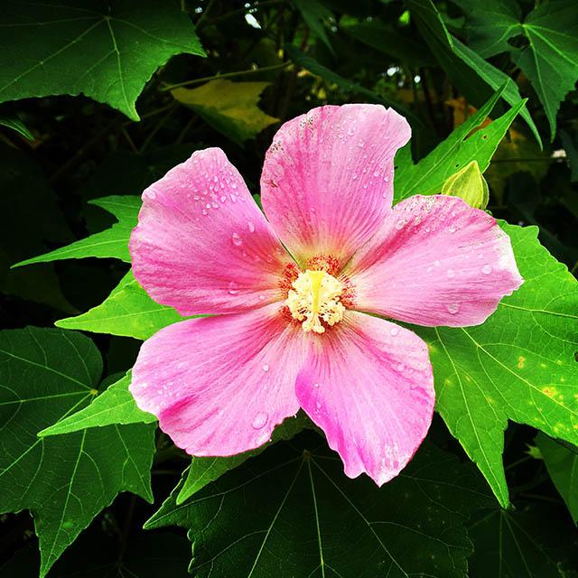 iyo_flower30.jpg