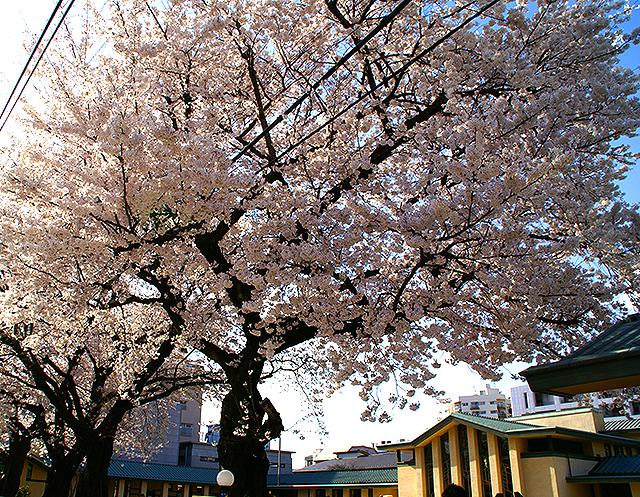 jiyugakuen_cherryblossomroom1a.jpg