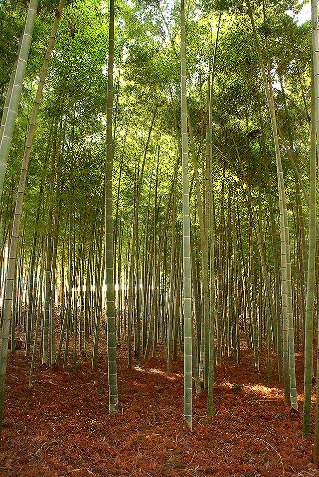 kairakuen_bambooforest.jpg