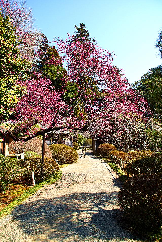kairakuen_kobuntei_path.jpg