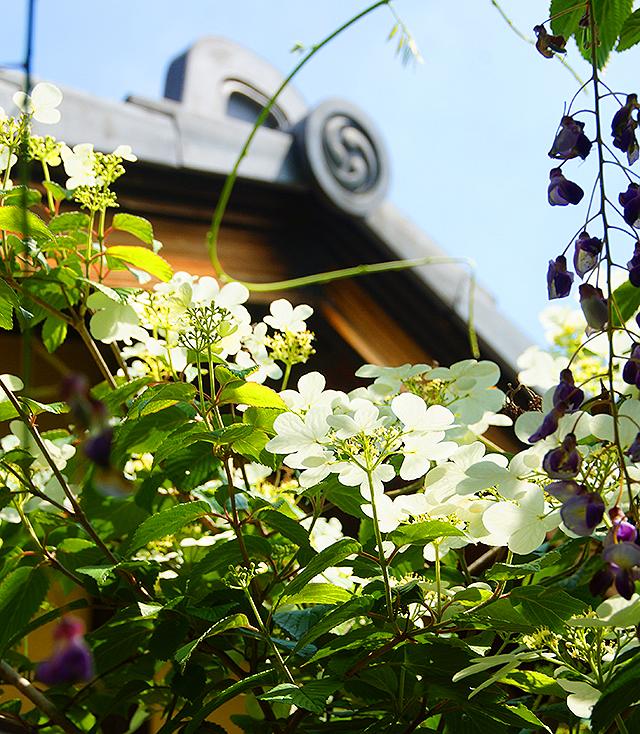 koshinan_flower.jpg