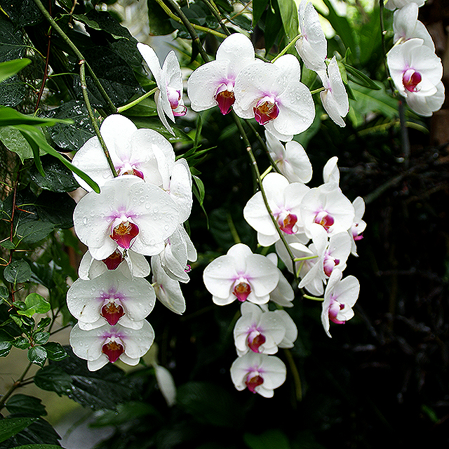makinoplantpark_whiteflower.jpg