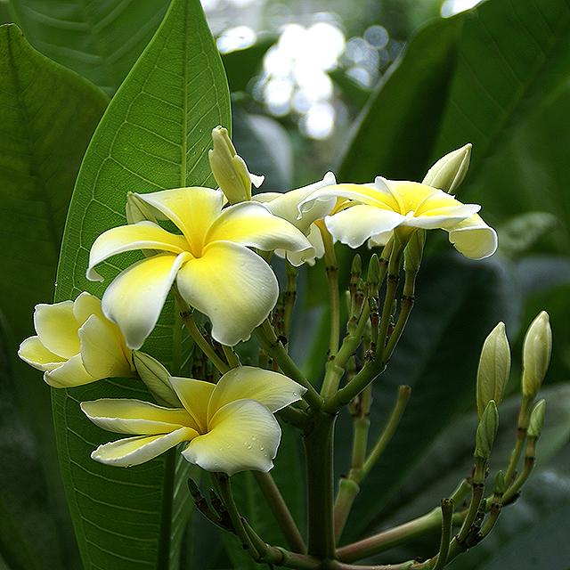 makinoplantpark_yellowflower1.jpg