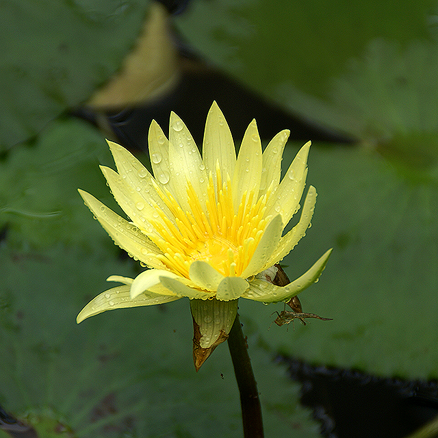 makinoplantpark_yellowflower2.jpg
