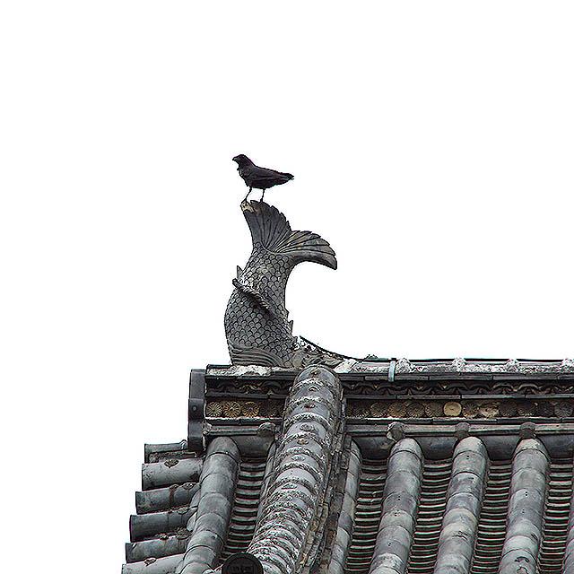 marugamejo_tenshu_crow.jpg
