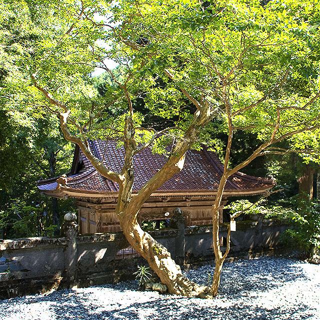 meisekiji_tree2.jpg
