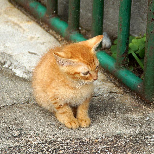 ogijima_cat.jpg