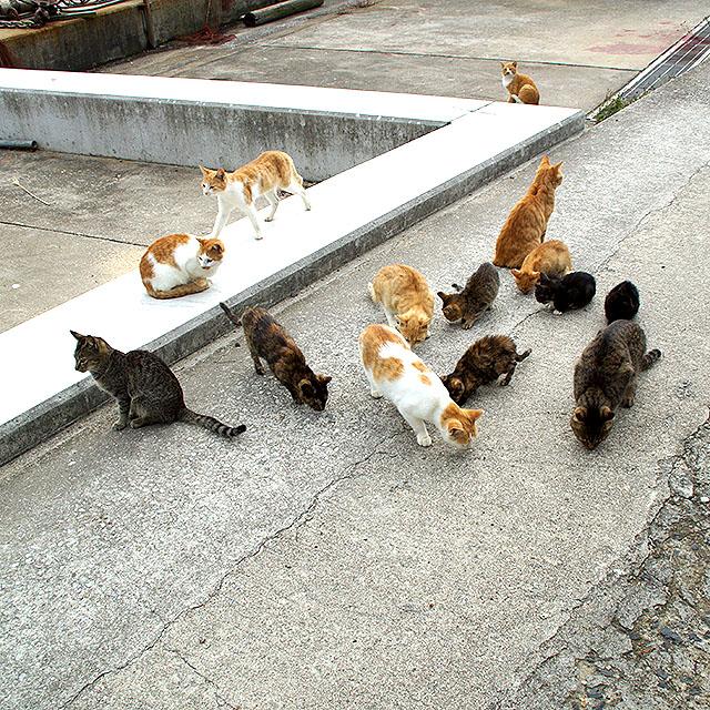 ogijima_cats.jpg