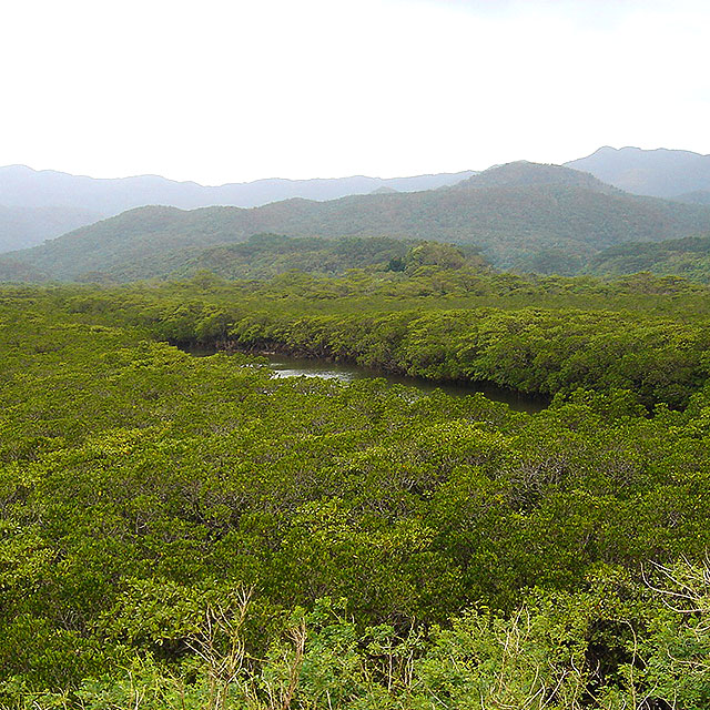 okinawa_jungle2a.jpg