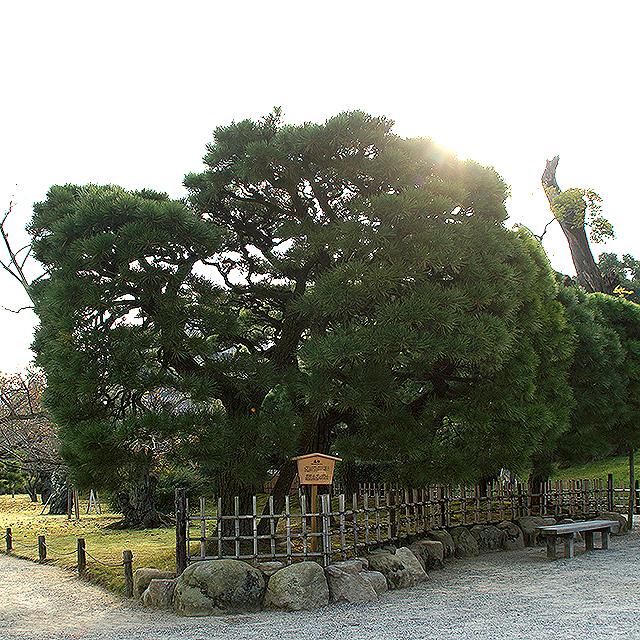 ritsurinpark_hakomatsu.jpg